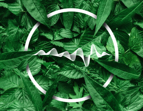 Effects of frequencies on plants