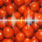 Sound Waves Effects on Tomato Fruit Quality