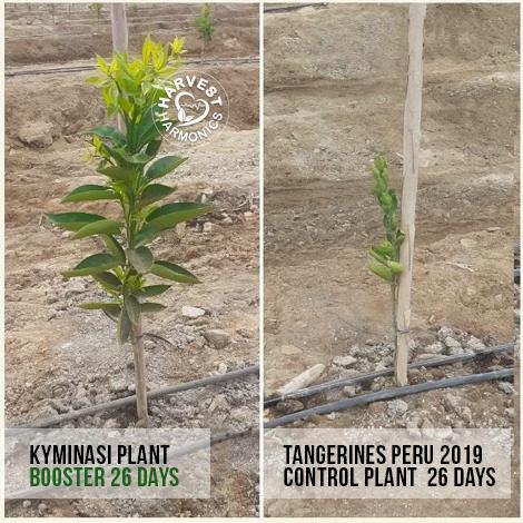 peppers-peru-kiminasy-harvestharmonics-farners-future-farms-crop-yield-profit-agriculture-220